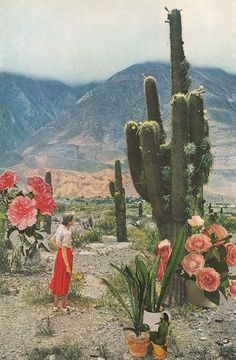 Available for purchase Desert Cactus Plants Landscape Flowers Lady America Painting Art Classic Sky Nature Beautiful Green Pink Red Orange Garden Photomontage, Desert Dream, All Nature, Foto Art, Cactus Y Suculentas, Cacti And Succulents, Cactus Plants, Indoor Cactus, Cacti Garden