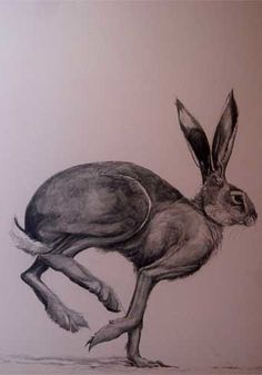Hare Drawing Moon eyed hare running over Jack Rabbit, Rabbit Art, 42 Tattoo, Hare Images, Hare Illustration, Illustrations, Running Drawing, Rabbit Tattoos, March Hare