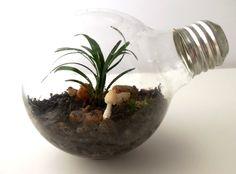 Glass Roots Terrariums: How do you build a great glass-jar terrarium? - Quora