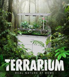 Banner Terrarium Facebook.jpg