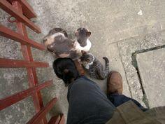 """""""Mamá Buena"""" - """"Negrito"""" (""""Bombay"""") y """"Tigrito"""" buscan protección y contacto con sus cuidadores. #Cat #Gato"""