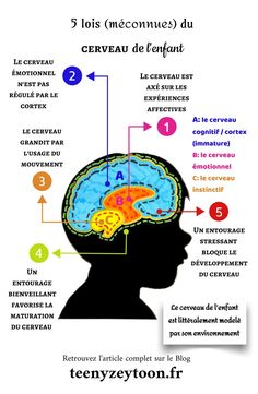 5 laws of the child's brain - Croix Verte - Education Parenting Classes, Kids And Parenting, Elementary Education, Kids Education, Education Positive, Montessori, Burn Out, Brain Gym, Learn French