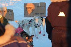 Iditarod Fairbanks 2017 http://ift.tt/2megkwa