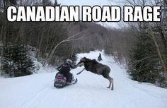 Funny Video and Pics Canadian Memes, Canadian Things, I Am Canadian, Canadian Winter, Canadian Humour, Canadian Facts, Canada Jokes, Canada Funny, Canada Eh