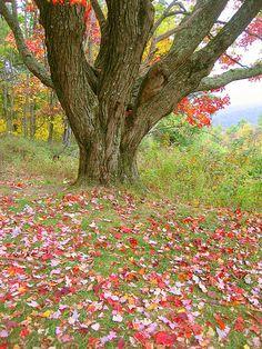 Skyline Drive - Shenandoah National Park, Virginia