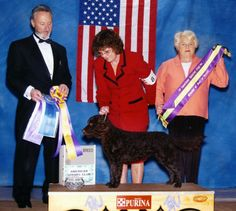Breeder Buzzwords – The American Water Spaniel | Best In Show Daily | 2013