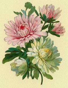 Chrsyanthemum artwork | chrysanthemum | tattoos: henna/ink