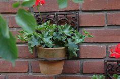 Ez az öntöttvas virágtartó harmonizál az egyszerű kő, fa, vagy tégla felületekkel, elsősorban a lakás külső falaira tervezték, de a teraszon is jól mutathat. Egyszerűen felszerelhető, és színt visz a kopár falakra. Wall Mounted Plant Holder, Wall Mounted Planters, Fallen Fruits, Flower Pots, Flowers, Spring Blooms, Plant Holders, Potted Plants, Planter Pots
