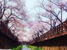 Cherry Blossom Festival - WEEKEND GETAWAYS: Things To Do in Seoul (Part 1)