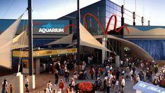 Ripley's Aquarium | Myrtle Beach, SC