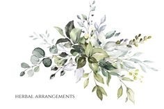 Watercolor leaves & herbs by Lisima on