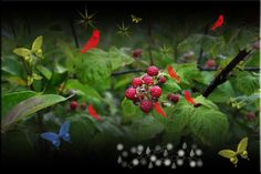 Berries 'n Nature