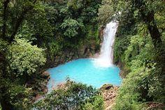 tropical rainforest | Tumblr