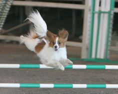 Dog agility training. Wish there was a zoomroom.com near me!