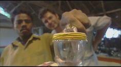 O efeito de uma gota de veneno de cobra num copo de sangue humano - TV UOL