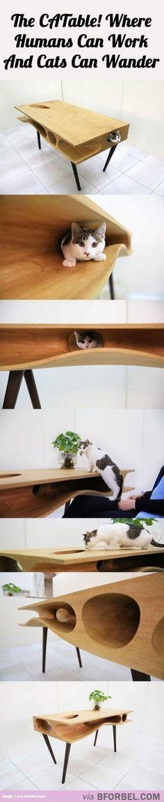 Finally A Way To Keep Cats From Wandering Onto Your Laptop… The CATable! Enfin, un moyen de garder les chats de errer sur votre ordinateur portable… Le CATable! Crazy Cat Lady, Crazy Cats, I Love Cats, Cool Cats, Pet Furniture, Table Furniture, Furniture Design, Cat Room, Here Kitty Kitty