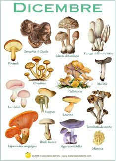Getting Your Mushrooms to Bud Can Be the Key to Growing Mushrooms Mushroom Drawing, Mushroom Art, Mushroom Fungi, Growing Mushrooms, Wild Mushrooms, Stuffed Mushrooms, How To Speak Italian, Mushroom Grow Kit, Mushroom Pictures