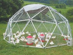 Zip Tie Dome Chicken Coop Doubles as Greenhouse