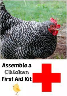 Chicken First Aid Kit - The Cape Coop Chicken Coop Kit, Portable Chicken Coop, Best Chicken Coop, Building A Chicken Coop, Chicken Pen, Backyard Poultry, Chickens Backyard, Backyard Farming, Keeping Chickens