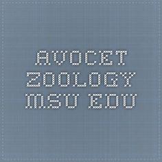 avocet.zoology.msu.edu