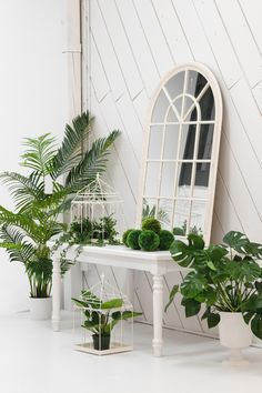 Our Greenhouse studio is the perfect photography spot for your creative endeavors. Located in Montreal. Montreal, Studios, Sunday, Spaces, Architecture, Creative, Plants, Photography, Instagram