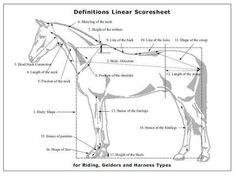 Linear Scoring - KWPN-NA