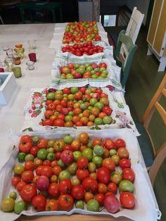 Tomaatteja kypsymässä sisällä