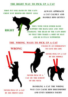 The right way to pick up a cat. A poster by Ruth AKA Kattaddorra. The right way to pick up a cat. A poster by Ruth AKA Kattaddorra. Cute Cats, Funny Cats, Cat Body, Cat Hacks, Cat Info, Cat Care Tips, Pet Care, Mini Comic, Kitten Care