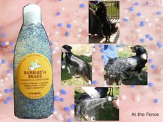 At the Fence: Bubbles n' Beads! Dog Shampoo and Conditioner!