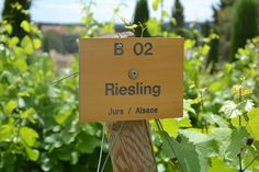 Wine and food go together like Batman & Robin - one just makes the other better. Here are some other classic pairings starring Riesling and some really delicious grub.  Tasty Twosomes: Top 5 Riesling Pairings http://winegeographic.com/tasty-twosomes-top-5-riesling-pairings/?utm_campaign=coschedule&utm_source=pinterest&utm_medium=Wine&utm_content=Tasty%20Twosomes%3A%20Top%205%20Riesling%20Pairings