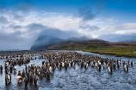 Il pinguino del Capo o pinguino dai piedi neri è un pinguino diffuso in Sudafrica e su alcune isole della Namibia.
