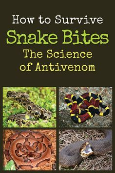 How to Survive Snake Bites: Snake safety has changed a lot! There is lots of false information floating around, so you may need this refresher. Survival Supplies, Survival Food, Outdoor Survival, Survival Knife, Survival Prepping, Emergency Preparedness, Survival Skills, Outdoor Camping, Survival Quotes