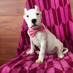 Best Chew Toys For Pitbull Puppies Top 5 Picks In 2020 Tough