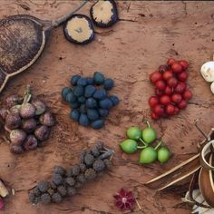 Native Australian foods are as delicious as they are wild. Yet Australia has never embraced its quandongs and its wallaby meats as part of its national cuisine.