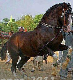 Dance horse