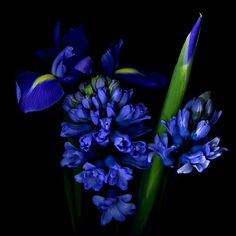 """•♥• 500px / Photo """"WINTER... THE ALL BLUES..."""" by Magda indigo"""
