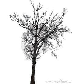 Silhouette Of A Birch Tree In Winter