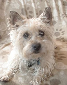 Col. Potter Cairn Rescue Network: Sunday Sweets Renata