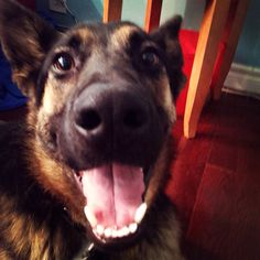 BEST excited face i've ever seen @gsd_chief