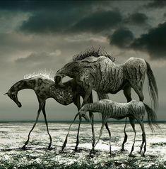 """praynightfall:    Grzegorz Kmin """"Wild horses"""""""