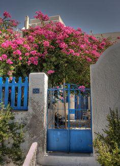 γαρυφαλλα στην αυλή μας.. Σαντορίνη Santorini, Mansions, House Styles, Flowers, Home Decor, Decoration Home, Manor Houses, Room Decor, Villas