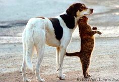 Best dog & cat pic I've seen in ages