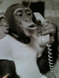 Banana phone?