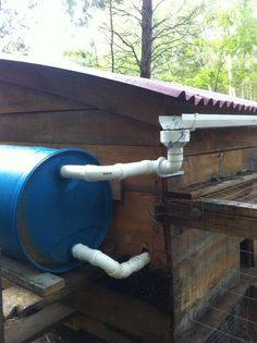 Rainwater chicken watering system