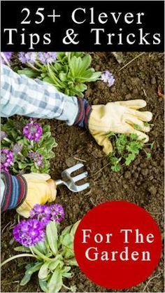 25+ Clever Tips and Tricks for the Garden. #garden Budget Gardening Tips #budget #summer