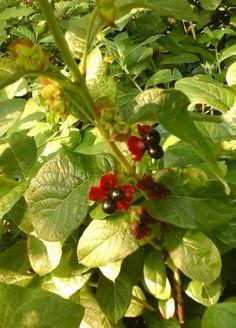 Plum Garden, Red Twig Dogwood, Viburnum Opulus, White Clematis, Mock Orange, Burning Bush, Rose Family, Spring Blooms, Plants