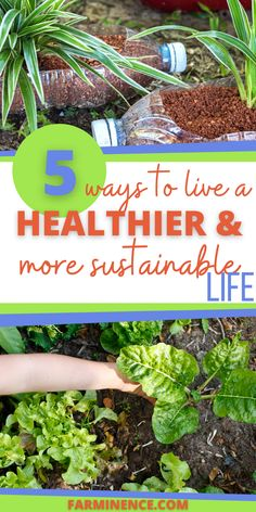 Are you looking for ways to live more sustainable or ecofriendly? Wondering how to live a healthier lifestyle? Living more sustainably may seem difficult, but you can do it by taking simple steps. Sustainable living is better for your health and the environment as well. Eco-friendly living involves much more than just recycling or cutting the lights off when you leave the room. See how you can live a healthier and more sustainable lifestyle, starting today. Sustainable Living, Sustainable Gardening, Garden Posts, Urban Homesteading, Wild Edibles, Natural Cleaners, Urban Farming, Chickens Backyard, Raised Beds