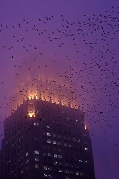 "Grackles and fog. ""Art Deco on a Foggy Houston Evening"" by AlphaTangoBravo / Adam Baker, via Flickr"