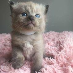 Sweet cat in 2020   A cat named bob, Cat aesthetic, Cats