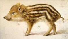 Hans Hoffmann, Wild boar piglet, 1578. Watercolour and gouache on vellum. Germany.